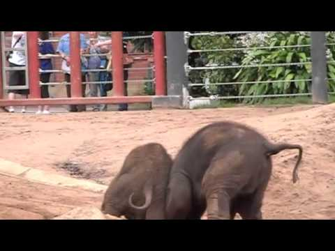 Mali & Ongard playing together
