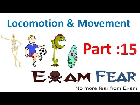 Biology Locomotion & Movement part 15 (Axial , vertebral column, Sternum , Ribs) CBSE class 11 XI