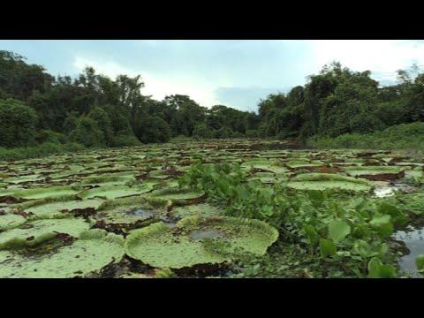 جنّة بانتانال البيئية معرّضة للخطر في البرازيل