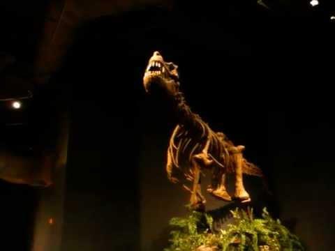 Tyrannosaurus speaks
