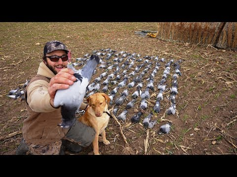 WE GOT A BAND! Wild Pigeon Hunting With 160 Birds!! (Pest Control)