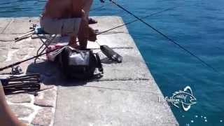Рыбалка в Черногории(Полный обзор по рыбалки вы найдете на http://www.bigfishings.ru/rybalka-v-chernogorii-s-berega.html размещены фото и видео материалы...., 2014-06-19T10:23:27.000Z)