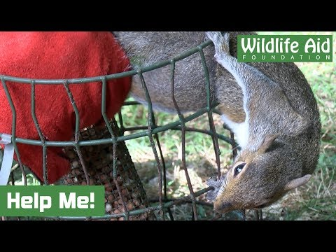 Trapped Squirrel Gets Rather Feisty