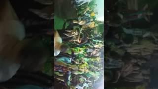 nava taliya ni pole Live videos navratri dance Ahmedabad