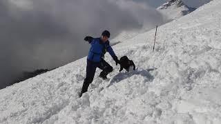 Собака нашла человека под снежным завалом в горах Сочи