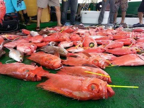 April 2015 South China Sea Fishing 2015年4月南中國海釣魚