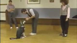 Heeling Tips - Sirius Puppy Training Classic
