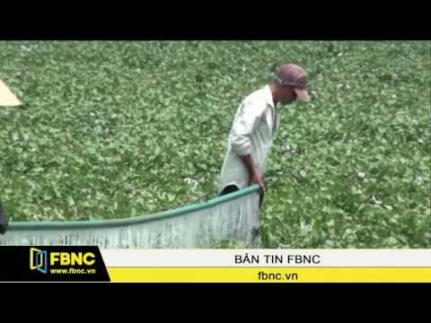 FBNC - 90% thuốc thực vật tại Việt Nam được nhập từ Trung Quốc