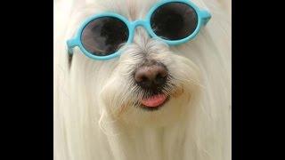 Pet Food Recall : Michou My Legendary Maltese