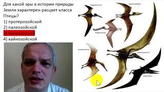 Для какой эры в истории природы Земли характерен расцвет класса Птицы?