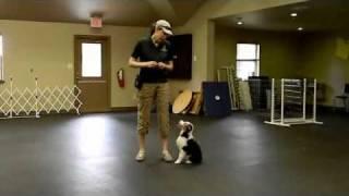 Puppy Leash Training.wmv