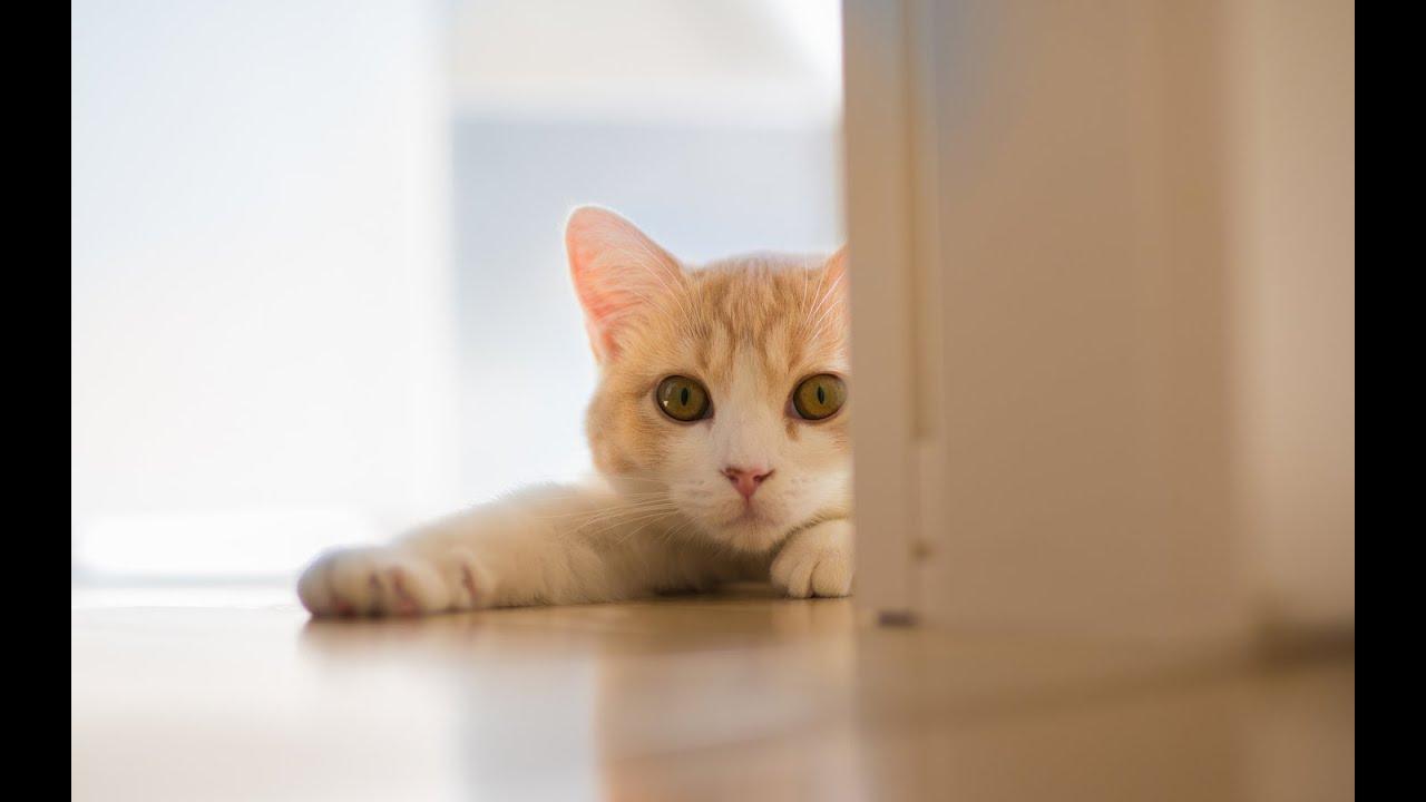 Видео приколы с кошками!Бегают и скользят по полу!Смешные кошки!Свежая подборка!