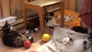 В городе открываются приюты для животных