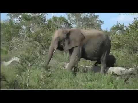 Wild Earth Africa sunset 2-march-2017 Bboys . Ellies,Karula.Giraffe