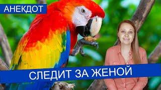 Анекдот про говорящего попугая