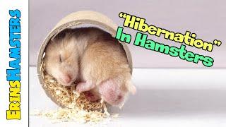 HIBERNATION IN HAMSTERS (TORPOR)