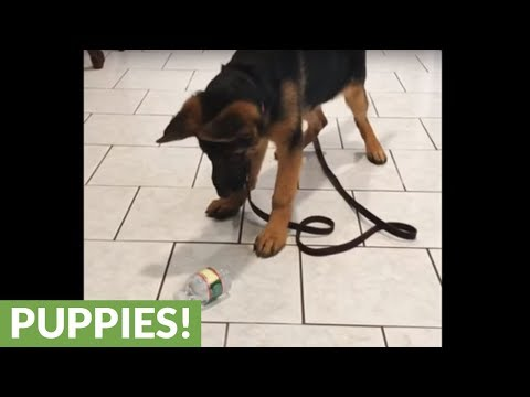 Puppy discovers water bottle, has total meltdown