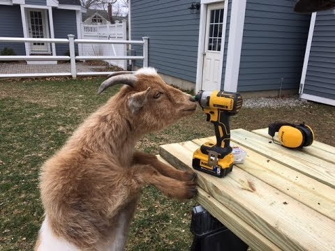 The Tradesman of the Month Award is the GOAT!!