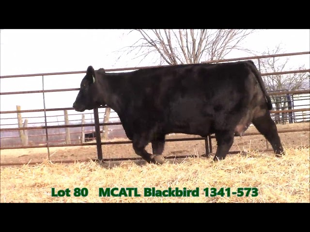 Musgrave Angus Lot 80