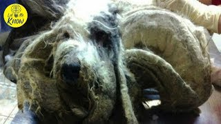 Poor Creature Found Alone In Kitchen Looks Unrecognizable After Four Trash Bags Full Of Fur Is Shave