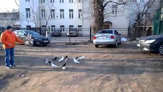 Мои бойные голуби