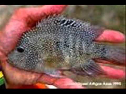 especies endemicas de coahuila