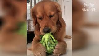 Funny animals Funny Videos To laugh