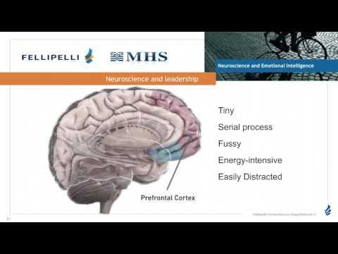 Neuroscience and Emotional Intelligence