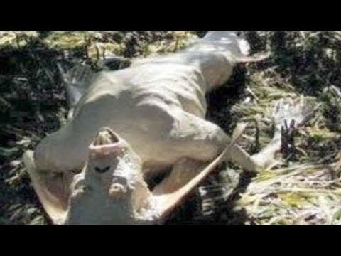 世界の巨大生物/未確認生物画像...