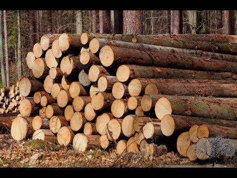 лес кругляк купить в области Тюмень