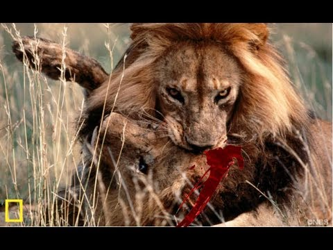 Wildlife Extreme Predators - African Savanna (Nat Geo)