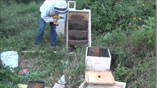 Installing Honey Bees Into An Observation Hive