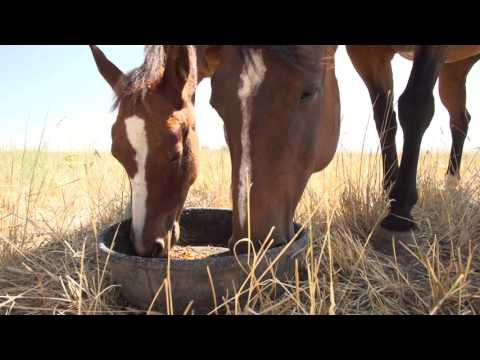 Feeding lactating mares | Purina Animal Nutrition