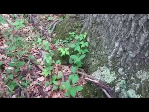 Summer Explorers' Camp Great Swamp Group 2  July 8, 2015
