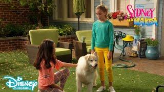 🐕 Sydney marzy o psie | Sydney na Maksa | Disney Channel Polska