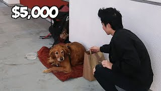 I Gave $5,000 To A Scared Homeless Dog