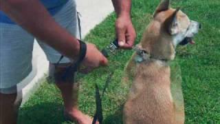 lead the way dog leash movie