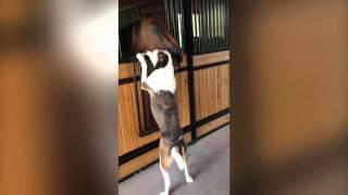 Собака и лошадь - лучшие друзья