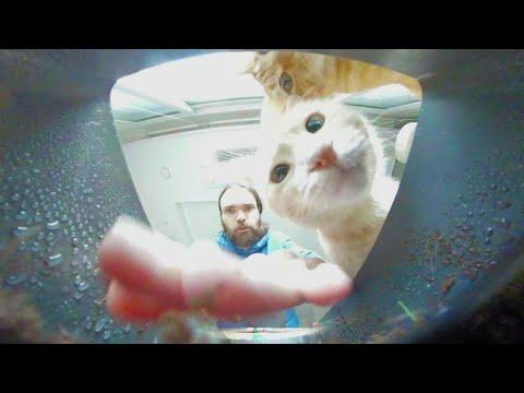 POV: You are my Cats Grass 🐈 ASMR 360 VR