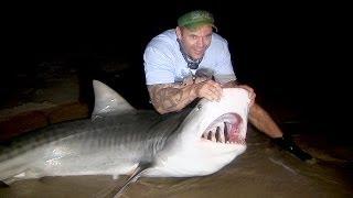 A Tiger Shark Tale