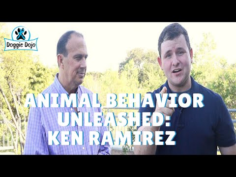 Ken Ramirez Interview - What rewards should I use?