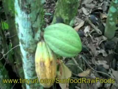 Raw Cacao Process - How to Make Chocolate with Sunfood using cocao nibs & raw cocao beans