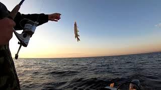 Рыбалка на Ладоге в Креницах. Наконец попали на бешеный клев окуня!