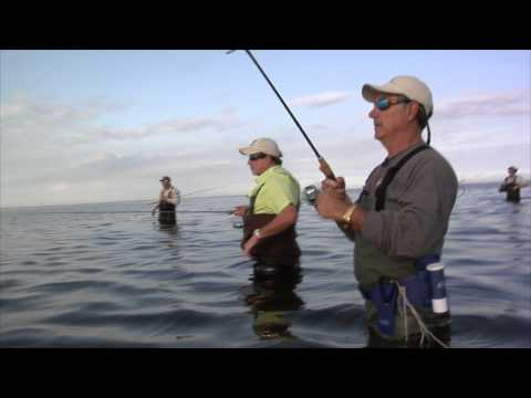 REEL ANIMALS FISHING • Wading (December / Sarasota Bay, Florida)
