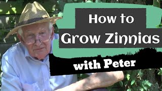 How to Grow Zinnias | Gardening Ideas | Peter Seabrook