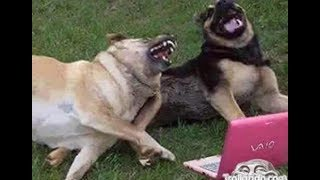 These Funny Dogs Will Make You LAUGH All Day
