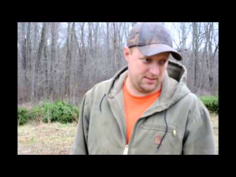 Mike Discusses   Norway  Spruce Tree Management