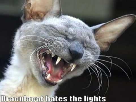 Very Funny Cats 52 - YouTube - photo#15