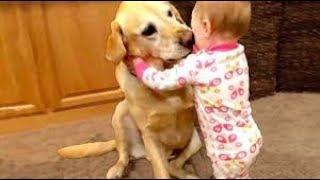 REAL HERO PETS WHO SAVE HUMAN LIFE | देखिये ऐसे जानवर जिन्होंने बचायी इंसानो की जान