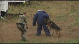 K9 Police Dog Training (part 2 Of 2)
